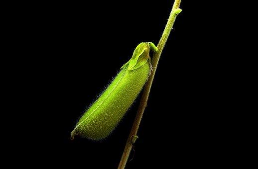 Flora, Tiny, Sheath, Macro