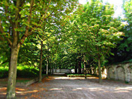 Alley, Park, Nature, Spacer, Landscape, Tree, Foliage