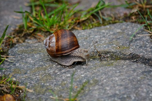 Animals, Snail, Home, Summer