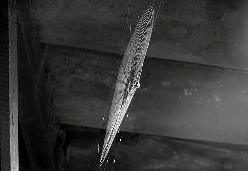 Black And White, Insect, Spider, Web