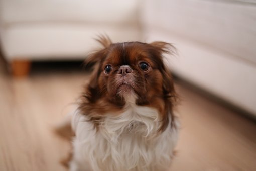 Scared, Dog, Looking, Animal, Pet, Adorable, Cute