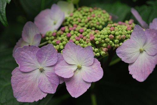 Flower, Powder Purple, Purple, Spring, Natural