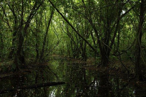 Forest, Green, Nature, Tree, Landscape, Natural