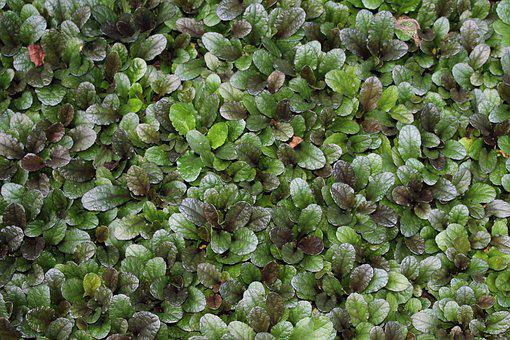 Texture, Green, Ground Cover, Textured Backgrounds