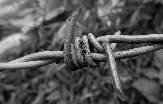 Black And White, Insect, Ant, Wire Of Pua, Nature