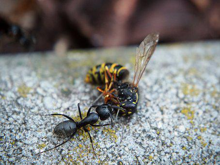 Ant, Wasp, Insect, Garden, Close, Nature, Animal, Eat