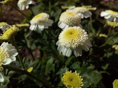 White, Little, Flower, Garden Flowers
