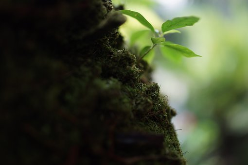 Mosses, Non-vascular Plants, Herbaceous