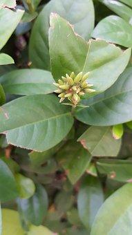 Green, Plant, Leaf, Nature, Summer, Natural, Tree