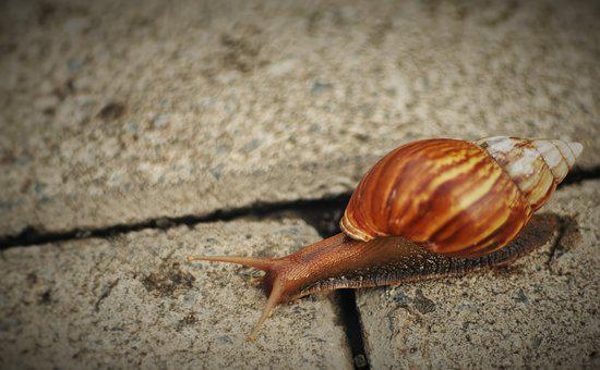 Snail, Nature, Natural, Garden