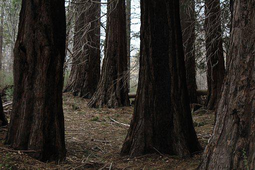 Trees, Tree Trunks, Nature, Trunk, Forest, Wood