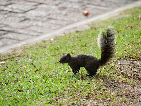 Squirrel, Park, Fluffy, Animal, Tail, Cute