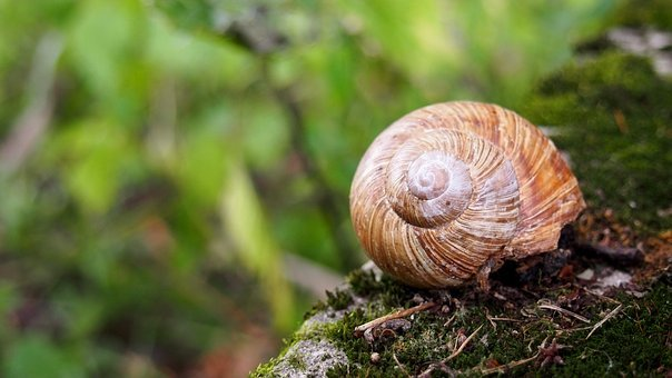 Animals, Snail, Nature, Crawl, Animal, Seashell
