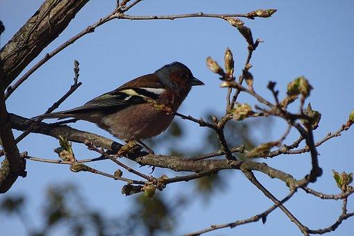 Bird, Nature, Little Birds