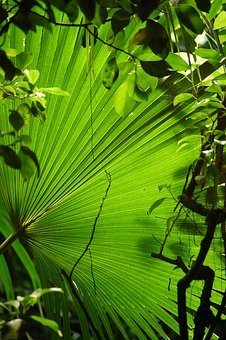 Subjects, Leaf, Leaves, Plant, Fanned Out