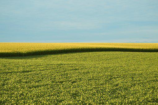 Farm Field, Field, Farm, Corn, Landscape, Agriculture