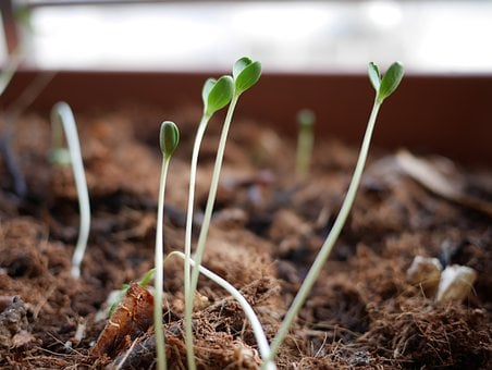 Sprouts, Plants, Seedling, Agriculture, Growing, Growth
