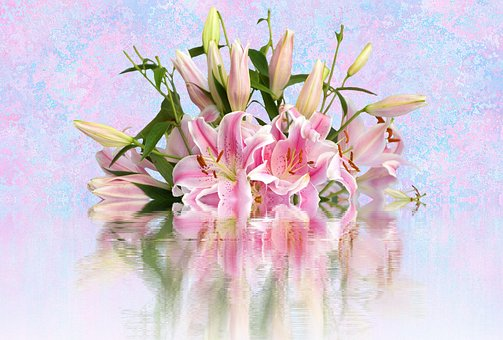 Lilies, Pink Lilies, Lily Family, Ornamental Flower