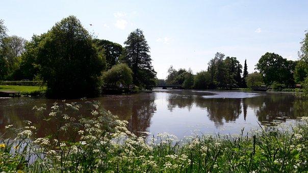 Svartån, Tree, å, Sweden, Water, Lake, Nature, Outdoor