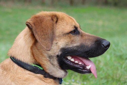 Dog, Profile, Wildlife Photography, Head, Portrait