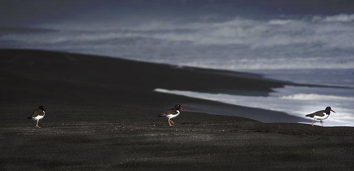 Birds, Sea, Chile