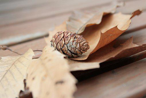 The Leaves, Pine Cone, Chair, Twig