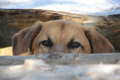 Dog, Head, View, Animal Portrait