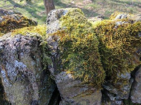 Moss, Greenery, Drystone Wall, Walls, Stones, Outdoors