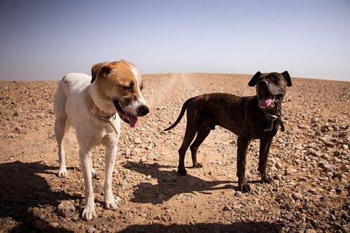 Desert, Dogs, Cute, Animal, Nature, Sand, Black, Friend