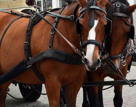 Kutsch Horse, Horses, Coach, Bridle, Team, Draft Horses