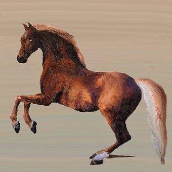 Horse, Animal, Animal World, Horse Head, Horse Stable