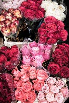 Roses, Rain, Travel, Flower, Nature, Floral, Garden