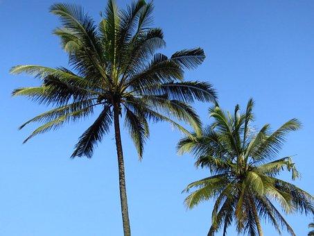 Bali, Palm Trees, Coconut