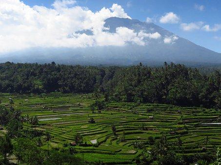 Bali, Volcano, Rice Fields