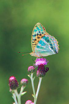 Butterfly, Nature, Animal, Flower, Fly, Background