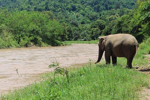 Elephant, Water, Proboscis, Mammal, Baby Elephant