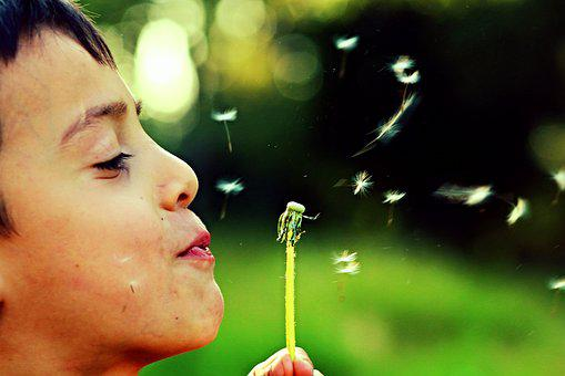 Dandelion, Freedom, Child, Spring, Outdoor, Human