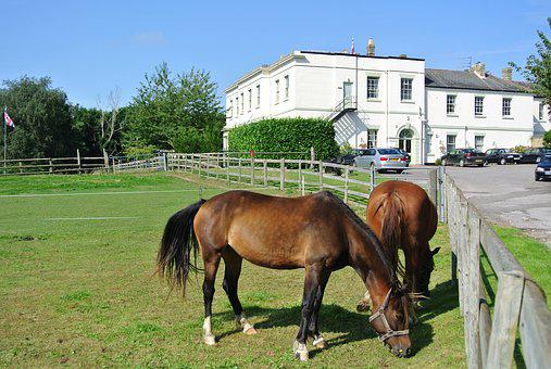 Country House, Horses, Country, House, Animal, Old