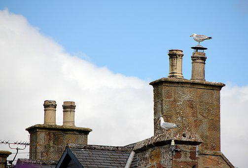 Seagull, Chimney, Roof, Roofs, Fireplace, Building