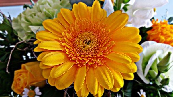 Gerbera, Flower, Nature, Yellow, Bloom, Ornament