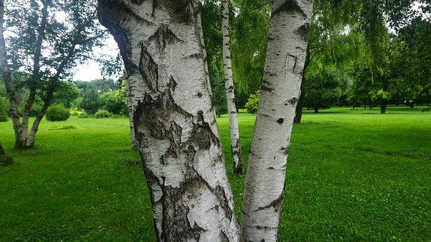 Tree, Grass, Nature, Landscape, Green, Summer, Plant