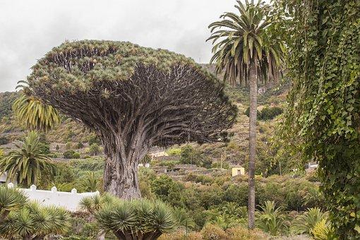 Views, Canary Islands, Icod De Los Vinos