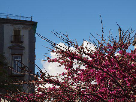 Spring, Flowers, Naples, Italy