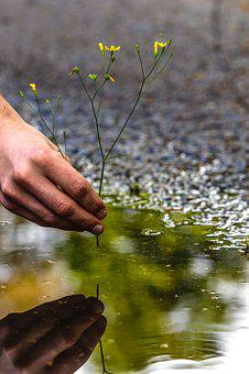 Puddle, Mud Puddle, Flower, Hand, Water, Reflection