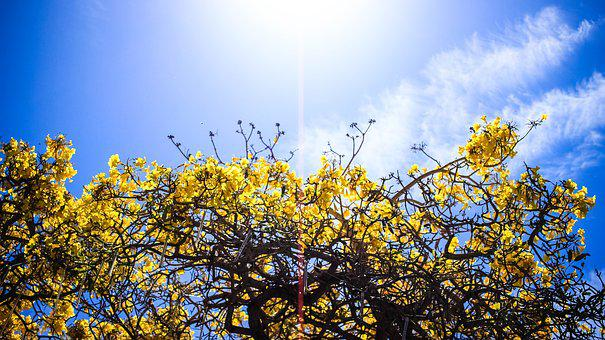 Flowers, Tree, Yellow, Sky, Nature, Summer, Sun, Spring