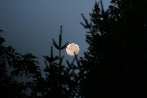 Moon, Night, Sky, Night Photograph, Night Sky, Mood