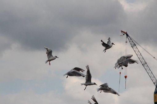 Seagull, Flying, Flight, Water, Sky, Coast, Sea, Nature