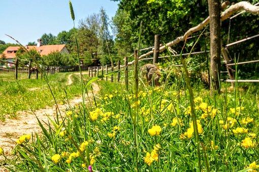 Path, Meadow, Grass, Walk, Romance, Sky, View
