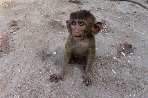 Monkey, Sweet, Cute, Animal, Animal Photo, Surprised