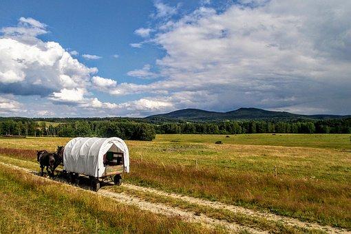 Summer, Holidays, Horses, Cart, The Coach, Trip, Path